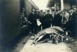 Loading deer on the train at Strong station, ca. 1915
