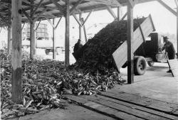 Canning factory, Fryeburg, 1938