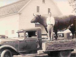 Eliab Shepardson with mounted ox, Stetson, 1931