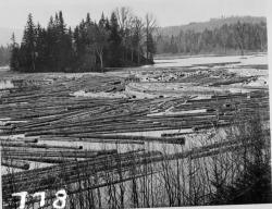 Logging, Maine woods, ca. 1900