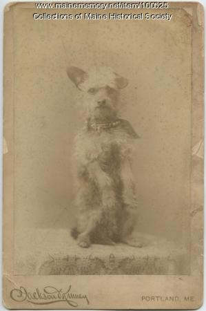 Portrait of a dog, Portland, 1890
