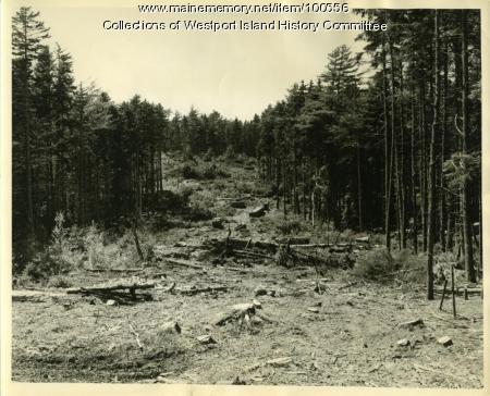 Forest fire lane, MacMahan Island, 1957