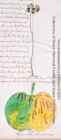 Gravenstein apple, Bangor, 1866