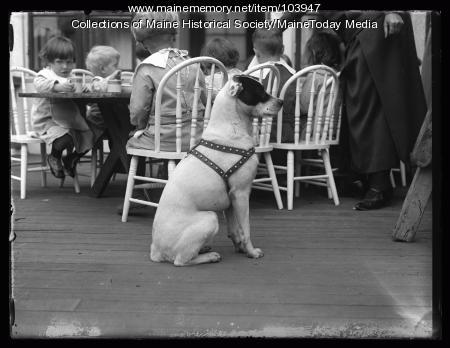 Dog at Portland Day Nursery, Portland, ca. 1923