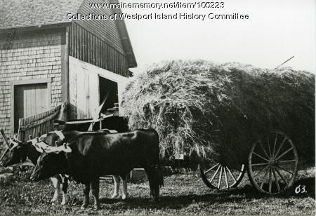 Hay wagon at the barn, Westport Island, ca. 1910