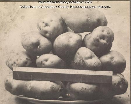 Aroostook County potatoes, 1909