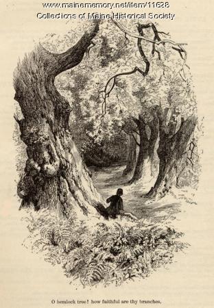 Illustration for The Hemlock Tree, ca. 1880
