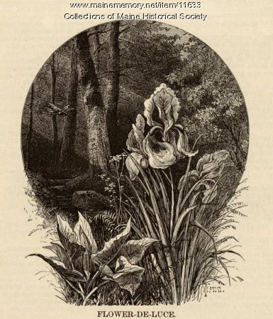 Illustration to accompany the poem Flower De Luce, ca. 1880