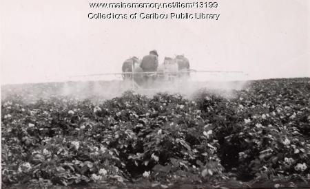 Spraying potato fields