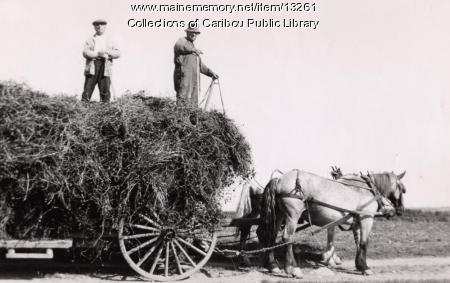 Transporting hay, Caribou, ca. 1940