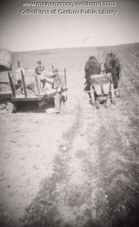 Planting potatoes, Caribou, ca. 1947