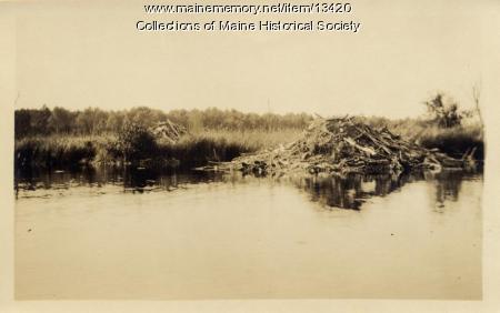 Beaver houses, Eagle Lake, 1911