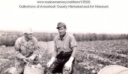 Prisoners of war picking potatoes, Houlton, 1945