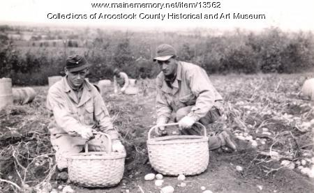 German POWs on the farm, Houlton, ca. 1945