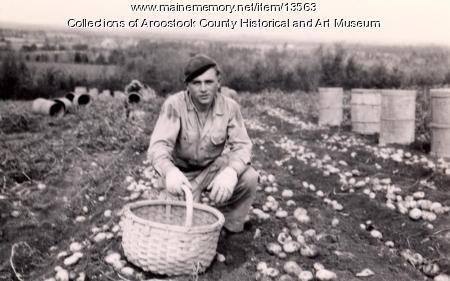 Prisoner of war picking potatoes, Houlton, 1945