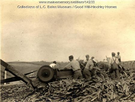 Cutting corn, Fairfield, 1916