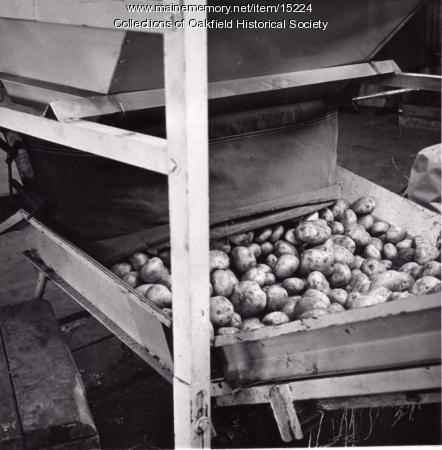 Processing potatoes, Aroostook County, ca. 1960