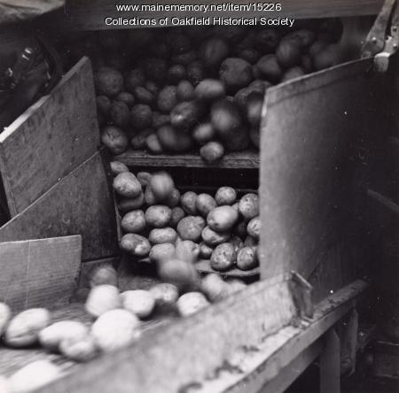 Potato delivery, Aroostook County, ca. 1960