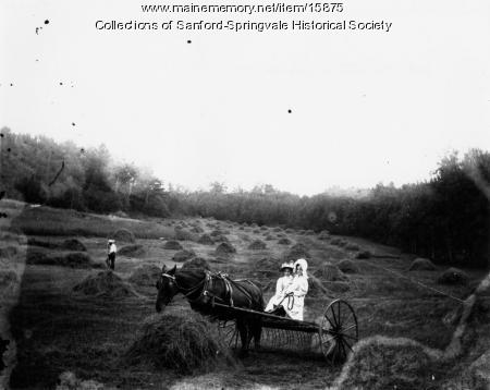 Girls haying, Sanford, early 1900s