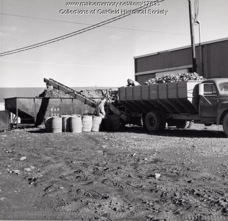Loading sugar beets, Aroostook County, ca. 1975