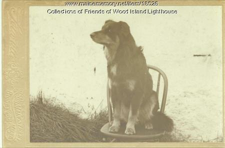 Sailor, family dog, Wood Island Lighthouse, ca. 1903