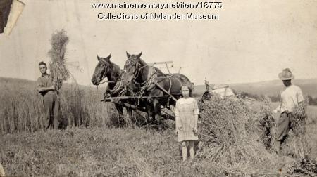 Wheat harvest, New Sweden, ca. 1922