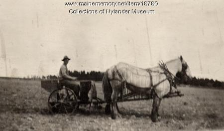 Horse drawn potato planter, New Sweden, ca. 1922