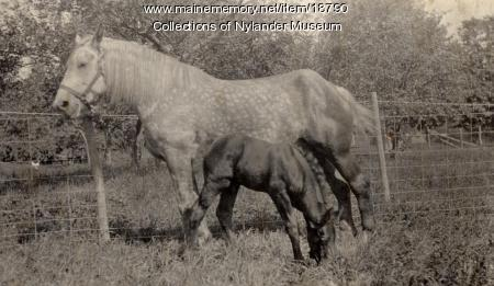 Mare and colt, New Sweden, ca. 1922