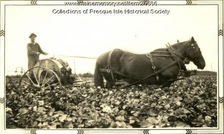 Jasper Beckwith Spraying Potatoes, Presque Isle, 1940