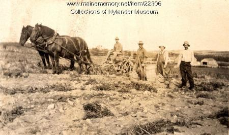 Potato harvest, Woodland, ca. 1922