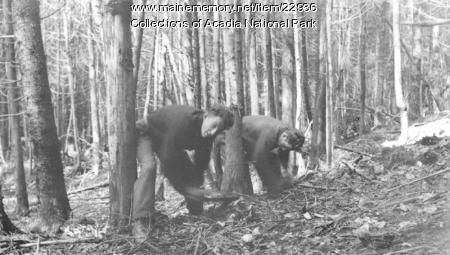 CCC workers in Acadia National Park, 1934