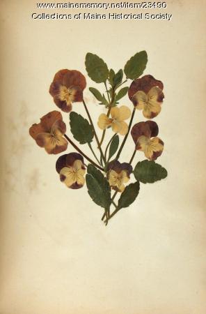 Pressed flowers, ca. 1840