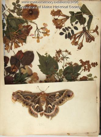 Pressed flowers, leaves and moth, 1831