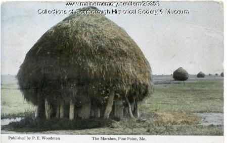 Marsh Staddle, Scarborough, ca. 1900