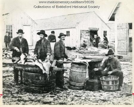 Dressing fish at Biddeford Pool, ca. 1875