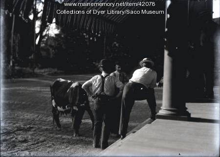Men discussing cow, ca. 1912