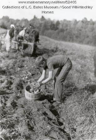 Boy Digging Potatoes, Fairfield, ca. 1935