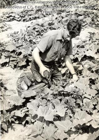 Good Will boy picking cucumbers, Fairfield, ca. 1960
