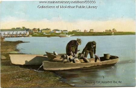 Dressing Fish, Biddeford Pool, ca. 1910