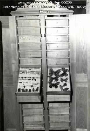 Wadsworth Insect Collection, Fairfield, ca. 1955