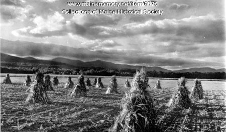 Cornfields, Fryeburg, ca. 1950