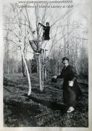 Tree climbing, Farmington, ca. 1917