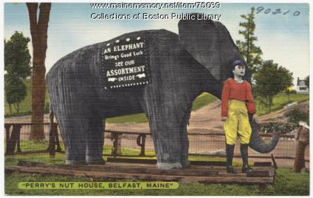 Perry's Nut House elephant, Belfast, ca. 1938