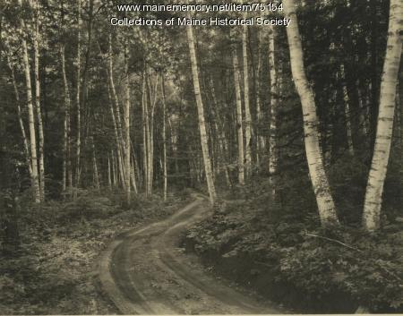 Road in birch forest, ca. 1935