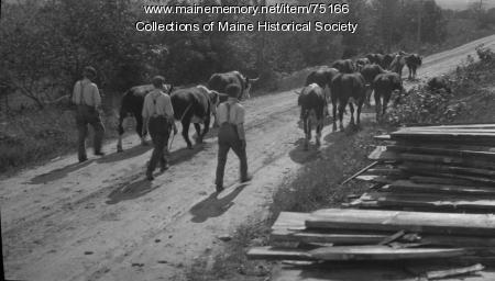 Men leading cows, ca. 1920