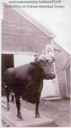 Eliab Shepardson Jr. with mounted ox, Stetson, 1931