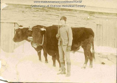 Clyde Rand with oxen, ca. 1902