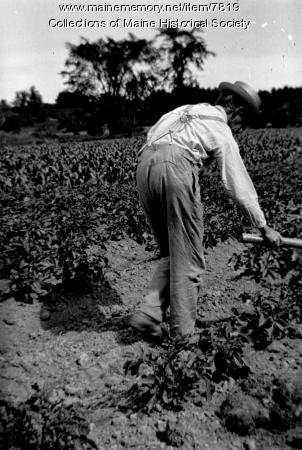 Putting Bug-Death on potatoes, 1910