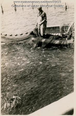 Seining herring, Lubec, ca. 1940