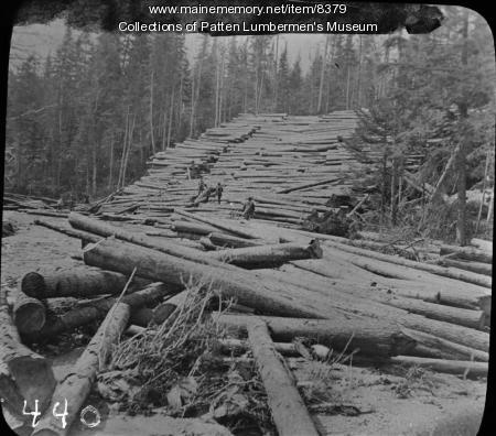 Logging in Maine Woods